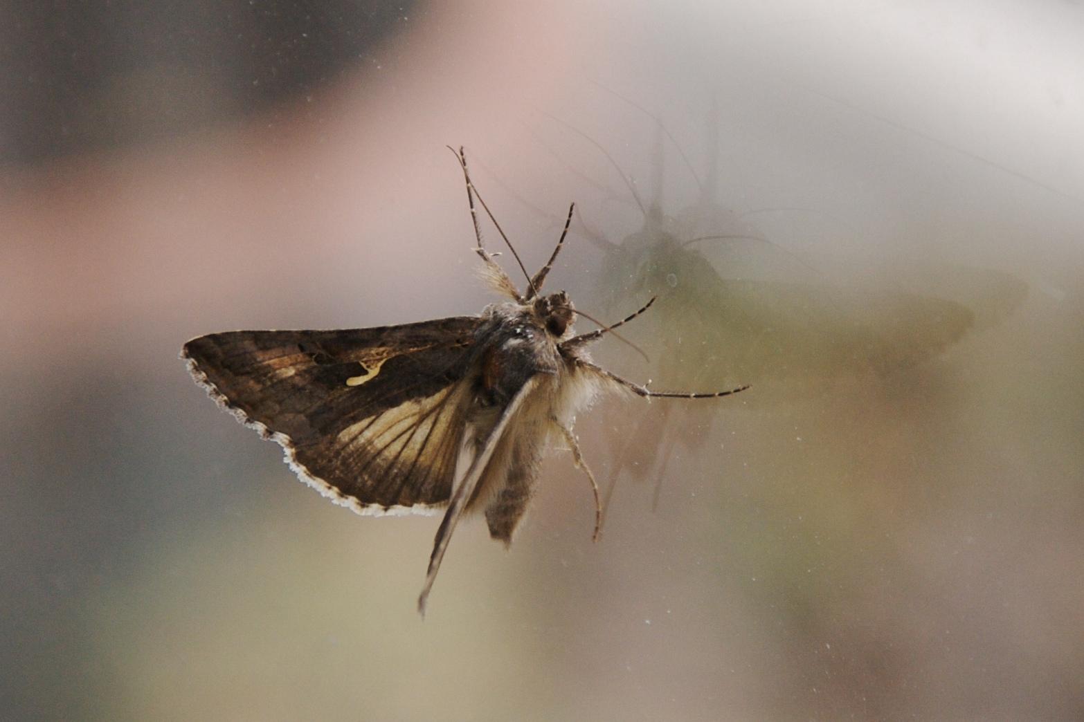 Moth, probably